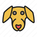 badger, dachshund, dog, face, pet icon