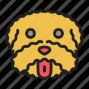 dog, face, maltese, pet, small icon