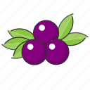 berry, blueberry, food, fruit icon