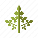 condiment, food, herb, ingredients, parsley, seasoning icon
