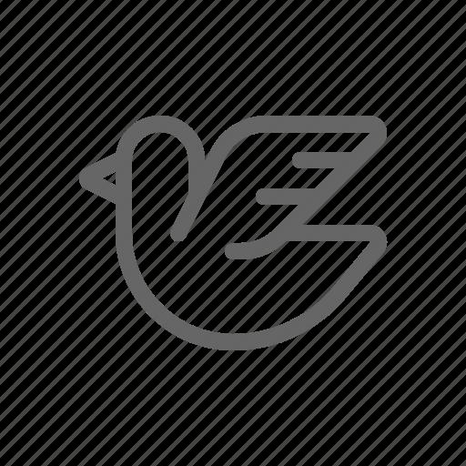 bird, messenger, pigeon icon