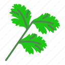 chinese parsley, cilantro, coriander, leaf, leafy greens, leaves, parsley