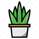 aloe vera, plant, nature, herbal, organic