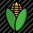 corn, maize, plant, farming, agriculture