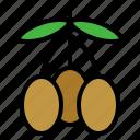 olive, fruit, organic, healthy, gardening