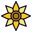 sunflower, botanical, bloom, seed, flower