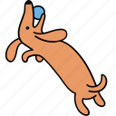 animal, ball, canine, dachshund, dog, pet, play icon