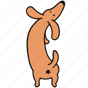 animal, ass, butt, canine, dachshund, dog, pet icon