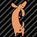 animal, ass, butt, canine, dachshund, dog, pet