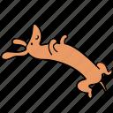 animal, canine, dachshund, dog, dream, lazy, pet