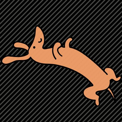 animal, canine, dachshund, dog, dream, lazy, pet icon