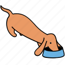animal, canine, dachshund, dog, eats, food, pet icon