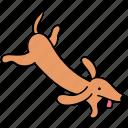 animal, canine, dachshund, dog, fly, pet, run