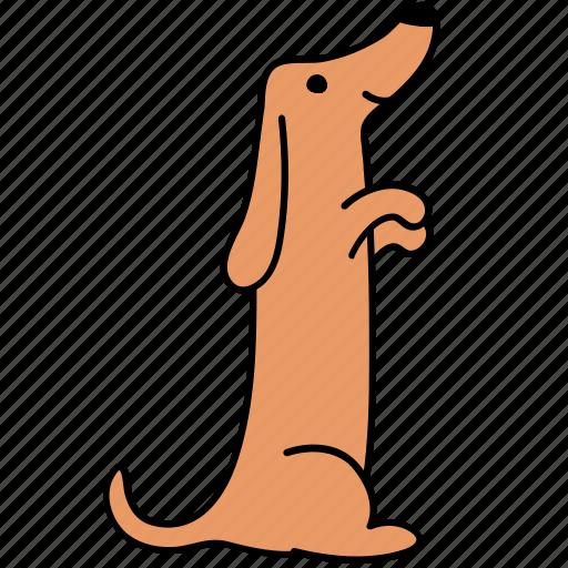 animal, canine, dachshund, dog, hind, pet, serve icon