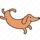animal, canine, dachshund, dog, hop, pet, run icon