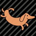 animal, canine, dachshund, dog, hop, pet, run