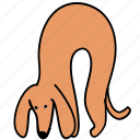 animal, canine, dachshund, dog, hunch, pet icon