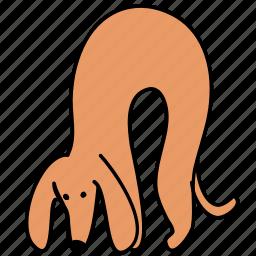 animal, canine, dachshund, dog, hunch, pet icon