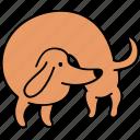 animal, back, canine, dachshund, dog, hunch, pet