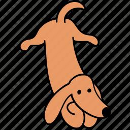 animal, attention, canine, dachshund, dog, listen, pet icon