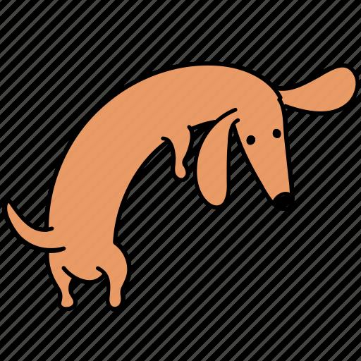 animal, back, canine, dachshund, dog, look, pet icon