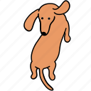 animal, back, canine, dachshund, dog, pet, turn icon