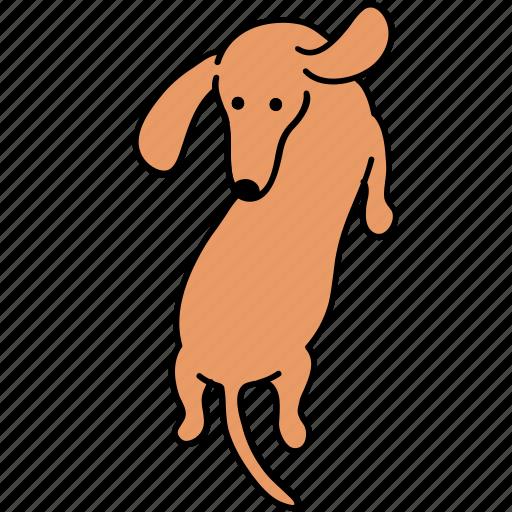 animal, back, canine, dachshund, dog, pet, turn icon