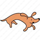 animal, canine, crazy, dachshund, dog, pet, run icon