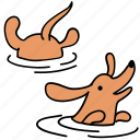 animal, canine, dachshund, dog, pet, swim, water icon