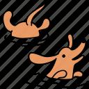 animal, canine, dachshund, dog, pet, swim, water