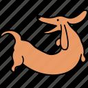 animal, back, bark, canine, dachshund, dog, pet