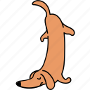 animal, canine, dachshund, dog, pet, tired icon