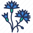cornflower, estonia, flower, national icon