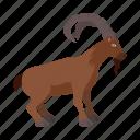 animal, goat, mountain, nature, wild, zoo