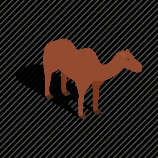 animal, camel, desert, isometric, tourism, travel, turkey icon
