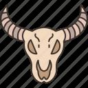 buffalo, bull, skull, head, animal