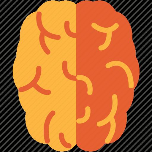 brain, head, mind icon