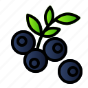 berry, blue, food, fruit, healthy