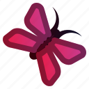 animal, butterfly, fly, insect, spring