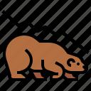 bear, market, trade, stock, cryptocurrency, bearish