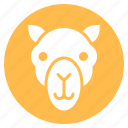 animal, camel, face, head, zoo icon