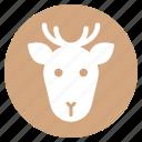 animal, deer, face, head, wild, zoo
