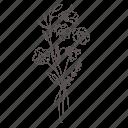 bouquet, floral, flower, garden, nature, plant, spring