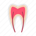 care, clean, dental, dentist, medicine, nerve, tooth icon