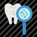 bacteria, dental, dentist, premolar, tooth