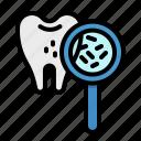 bacteria, dental, dentist, premolar, tooth icon