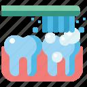 tooth, dental, brushing, teeth
