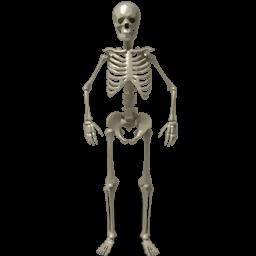 avatar, bone, bones, dead, deadly, death, food, halloween, human, hungry, monster, poison, radiology, radioscopy, ribs, scary, skelet, skeleton, standing, starv, starve, trouble, ukraine, zombie icon