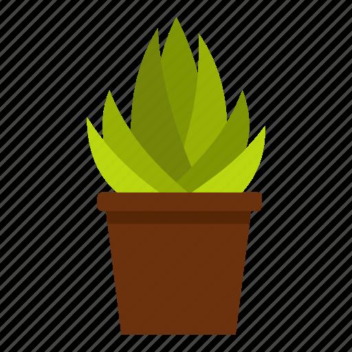 aloe, cactus, desert, nature, plant, succulent, xanthorrhoeaceae icon
