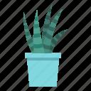 cacti, cactus, desert, mexican, nature, plant, succulent icon